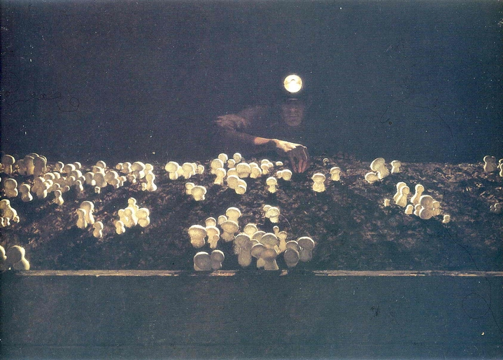 jamie-wyeth-mushroom-picker_mcb