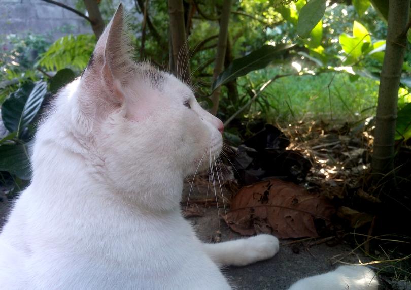 Frankie the Philosopher Cat
