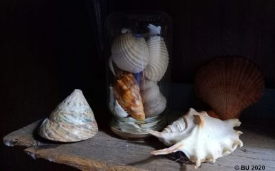 Tribute to seashells: Three verses, one music video