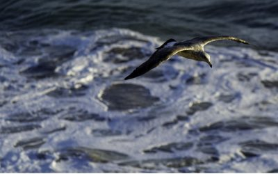 A salute to seagulls in poetry, music and art